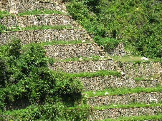 the great wall of llamas - Choquequirao